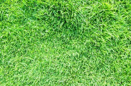 plant leaf: Grass filed nature background outdoor green
