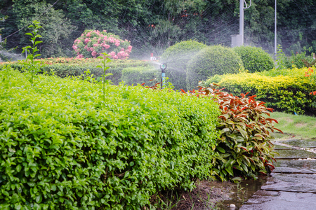 gardening: Nozzle Sprinkler spraying water in the park