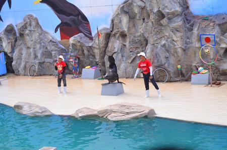 nakhon: NAKHON RATCHASIMA THAILAND : 2016 MAY 08 The show of seals In Nakhon Ratchasima Zoo