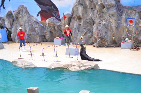 ratchasima: NAKHON RATCHASIMA THAILAND : 2016 MAY 08 The show of seals In Nakhon Ratchasima Zoo