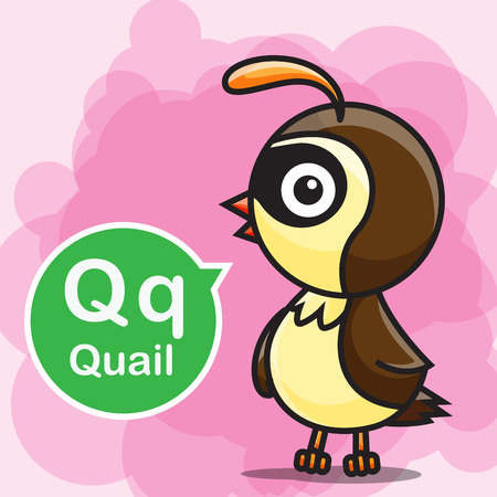character cartoon: Q Quail animal cartoon and alphabet for children to learning and coloring page vector illustration eps10