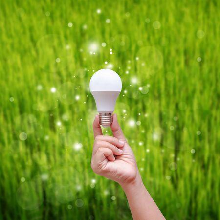 Woman hand holding LED bulb on green backgroud