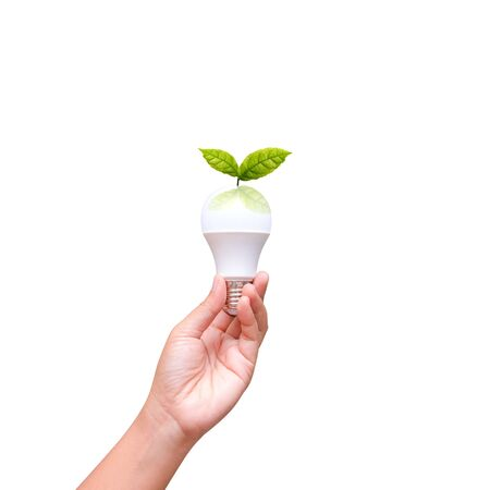 Isolated of woman hand holding LED bulb on white background Stock Photo