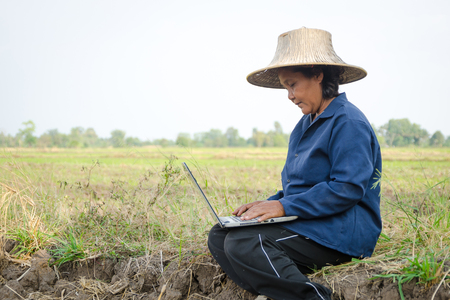agronomist: Asian Thai farmer using laptop computer in the rice field