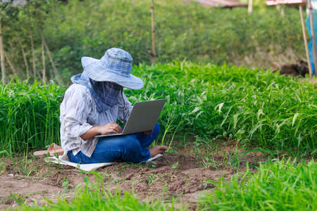 Thai farmer is using a laptop computer in a fresh morning glory vegetable farm, organic healthy food and technology concept, select focus shallow depth of field