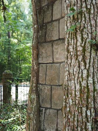 나무로 자란 벽돌 스톡 콘텐츠