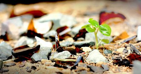 crecimiento planta: Nuevo crecimiento de las plantas en la basura