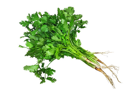 Green fresh coriander isolated on the wooden table Imagens