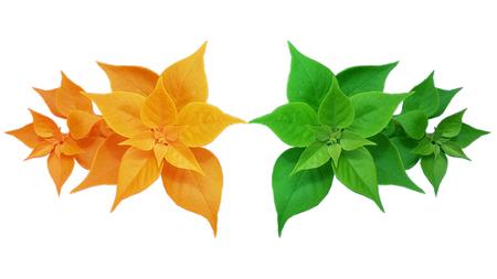 two tone: Leaf two tone on white background Stock Photo