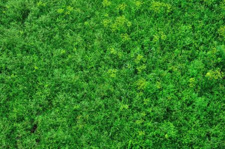grass area: Top view of grass field Stock Photo