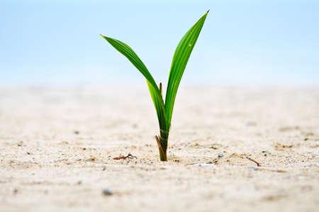 Closeup of baby tree on sand photo