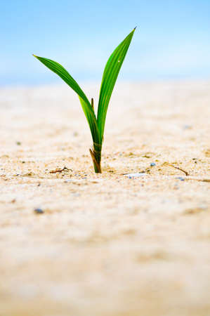 Closeup of baby tree on sand photo