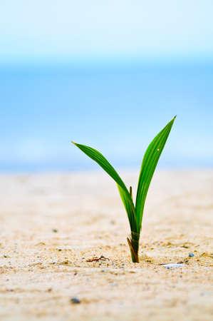 Closeup of baby tree on sand