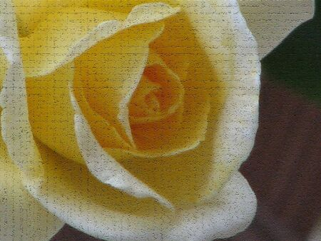 craquelure: Macro shot of a single yellow rose, the rose had been texturized with craquelure texture. Stock Photo