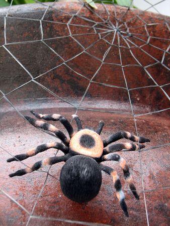 arachnophobia animal bite: Shot of a spider (tarantula), on its spiderweb.  (Decoration for )