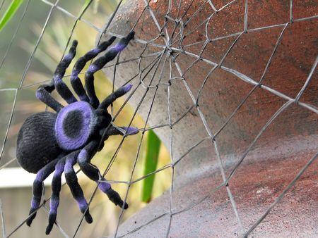 tarantula: Shot of a spider (tarantula), on its spiderweb.  (Decoration for )