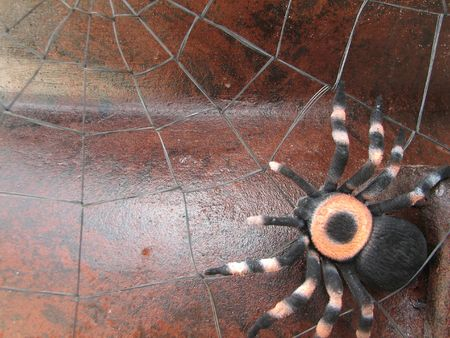 Shot of a spider (tarantula), on its spiderweb.  (Decoration for ) photo