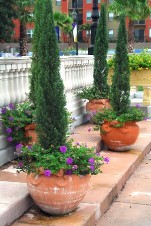 roost: Shot of four giant clay pots with some evergreen and plants with flowers on it. Cranes Roost Park in Altamonte Springs, Florida. Stock Photo
