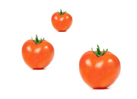 Juicy organic Tomatoes