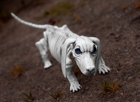 Halloween skeleton dog guarding his territory. Halloween is a holiday celebrated on the night of October 31. Traditional activities include trick-or-treating, bonfires, costume parties, visiting haunted houses, and carving jack-o-lanterns