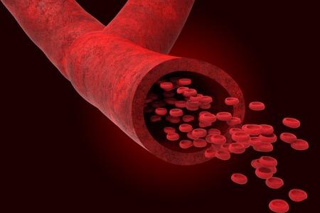 globulo rojo: Los vasos sanguíneos con bloodcells que fluye a través