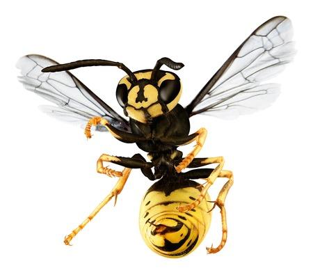 hornet isolated on white background.
