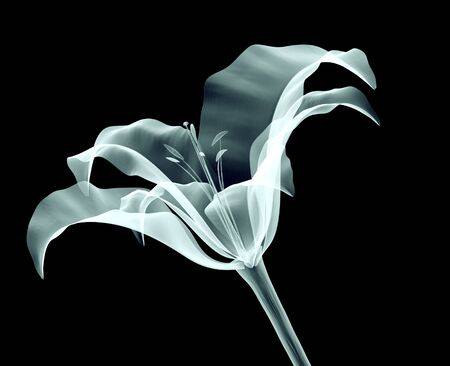 xray image of a flower isolated on black with clipping path