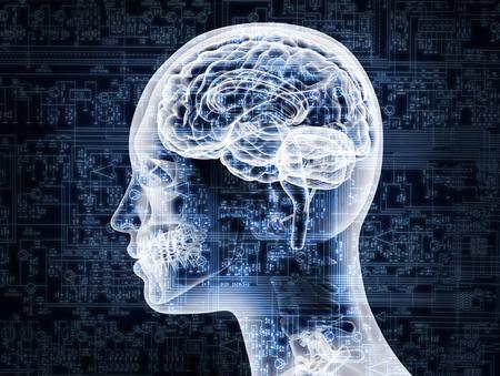 thinking brain: Illustrative representation of female brain anatomy.