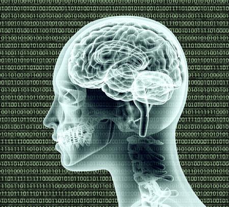 decoding: x-ray image of human head with binairy code and a brain.