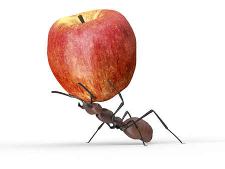 ant is lifting an apple isolated on a white background