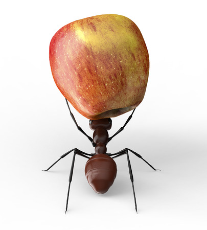 lift and carry: ant is lifting an apple isolated on a white background