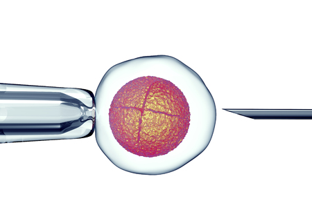 reproductive technology: egg is holding by a pipet and a neeldle. Stock Photo