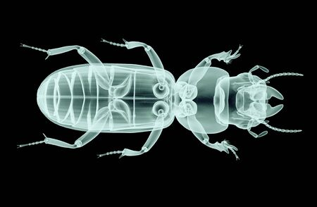 radiology: xray image of an insect isolated on black with clipping path.