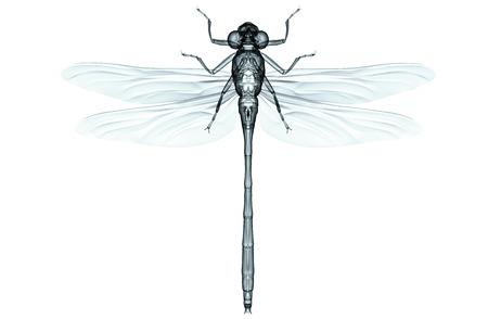 Xray Bild von einem Insekt isoliert auf weiß mit Clipping-Pfad. Standard-Bild - 55471441