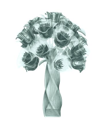 roentgenogram: x-ray image of a flower  isolated on white , the rose 3d illustration