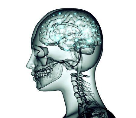 cognicion: imagen de la radiografía de la cabeza humana con el cerebro y los pulsos eléctricos, ilustración 3d
