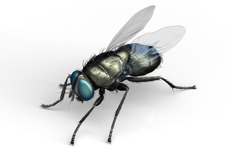 housefly, insect isolated on white   3D illustration.