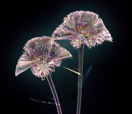coxcomb: color glass flower isolated on black, the coxcomb 3d illustration