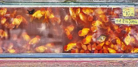 fishtank: lot of fish in fish tank for sale.