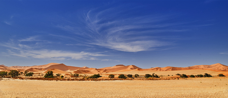 desert of namib with orange sand dunes. 版權商用圖片 - 81864305