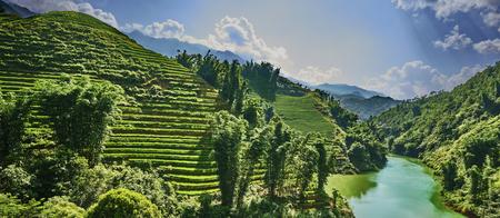 ベトナムの山々の緑の水田