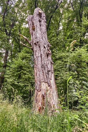 old dead tree with mushrooms in green park. 版權商用圖片