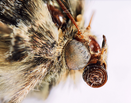 extreme close up of a moth isolated on white
