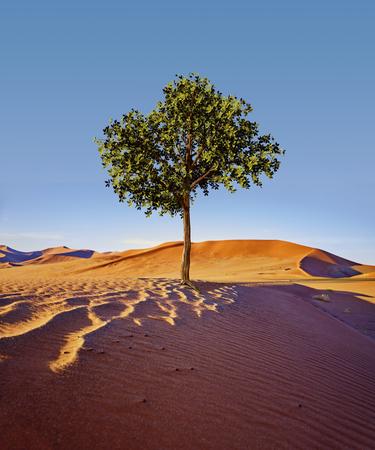 brave tree standing alone in the desert.