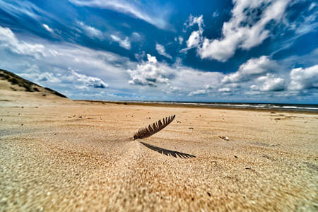 Dutch dunes, with feather in foreground, taken with a wide angle on a sunny cloudy day.