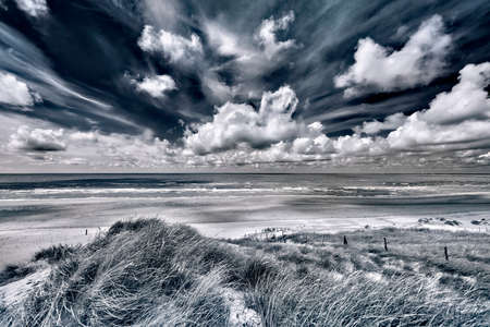Dutch dunes, grown with Beach Grass, taken with a wide angle on a sunny cloudy day.