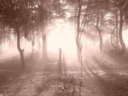 cathartic: fog in the forest