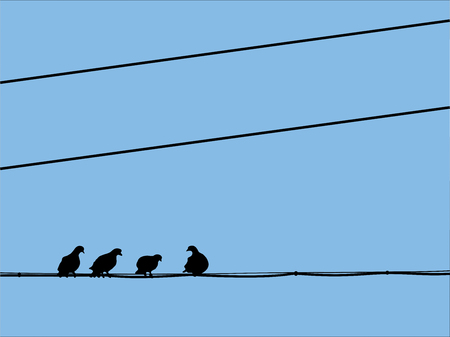 pigeons: The silhouettes of pigeons, sitting on the wires