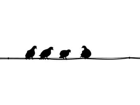 pigeons: The silhouettes of pigeons sitting on the wires
