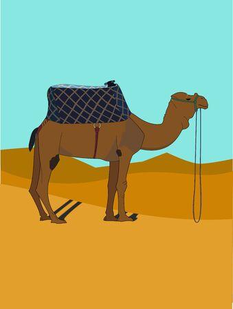 Camel in a desert
